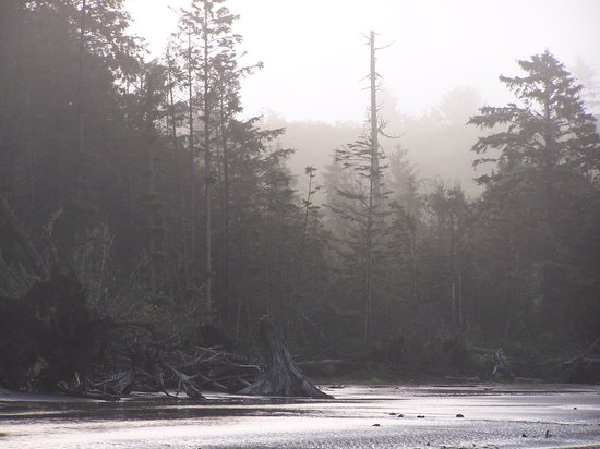 Moclips, WA: View across the river to the forest
