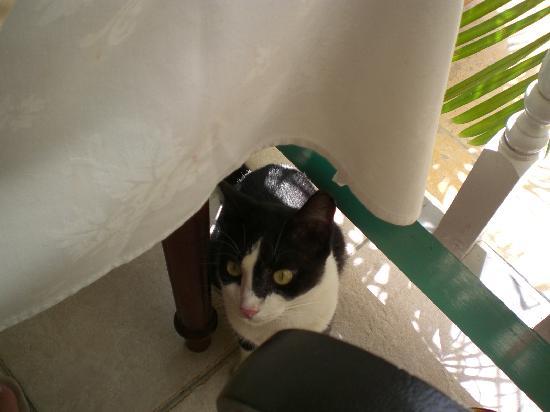 Blue Waters Antigua : Felix the cat!!