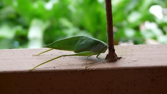 Mar y Selva Ecolodge : Another insect