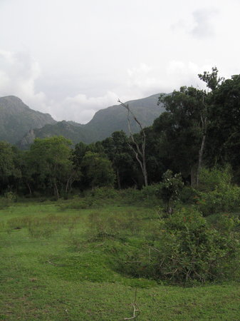 Masinagudi, India: views