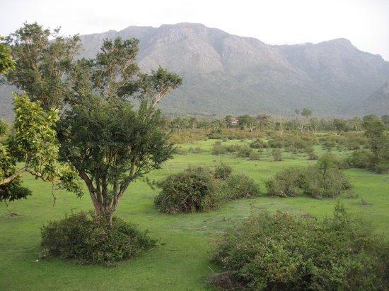 Masinagudi, الهند: hills