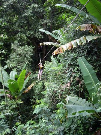 Tri Gong Residence: Fly through the rainforest.