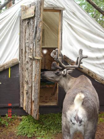 Saint-Felicien, كندا: visite sympa