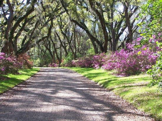 Saint Francisville, Louisiane: Aftron Villa Gardens Allee