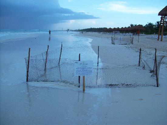 Secrets Maroma Beach Riviera Cancun : Turtle Nest Enclosure on the Beach