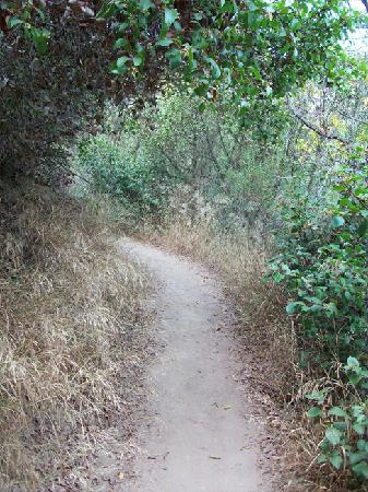 Temescal Gateway Park: This was an easy going trail but,