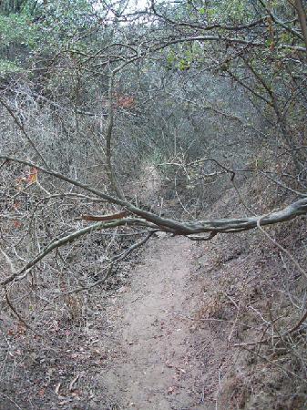 Temescal Gateway Park: Side trail, anyone?