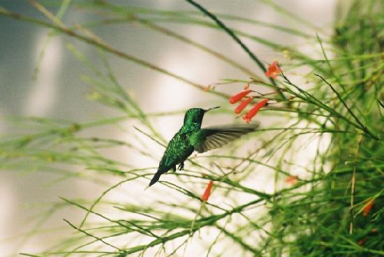 Natal, RN: Hummingbird at our hotel
