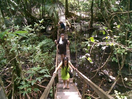 Bambua Nature Cottages: monkey trail