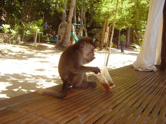 La Luz Beach Resort: say hi to Justin the pet monkey