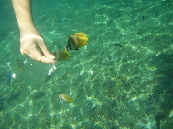 La Luz Beach Resort & Spa: feeding the fish