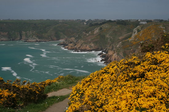 St Martin, UK: Wild flowers and cliffs