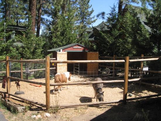 Eagle's Nest Bed and Breakfast Lodge: Miniature Horses