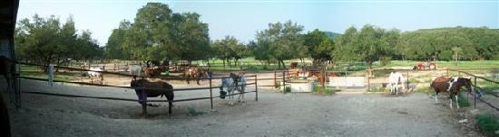 Rancho Cortez: The horse corral