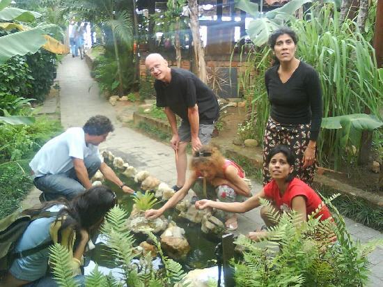 Pousada Tropicana: Sauvetage des poissons du bassin