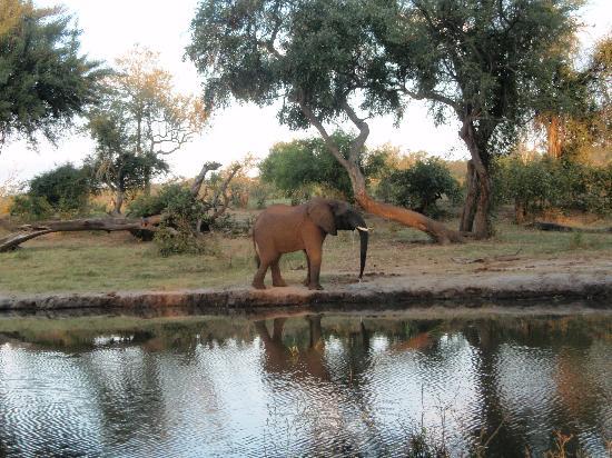 Matetsi Private Game Reserve: Elefante por la orilla del Zambeze