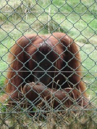 Monkey World : MonkeyWorld-Dorset4