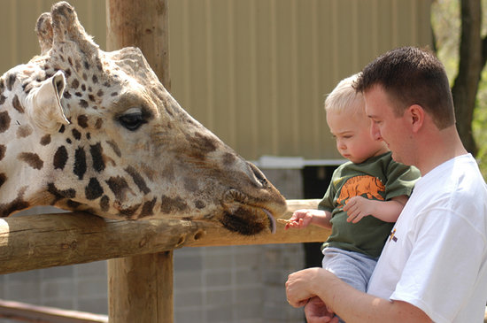 Springfield, MO: Feeding the giraffe