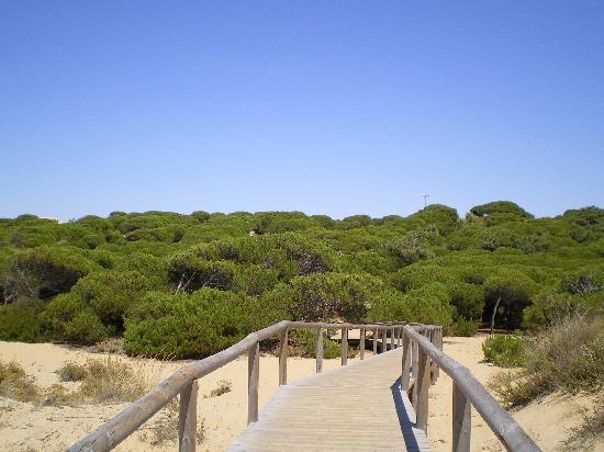Apartamentos Leo Punta Umbria : Acceso a la playa