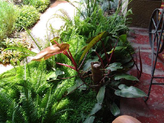 Hotel Palacio Chico 1754: garden