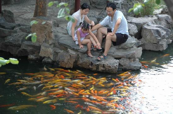 The Lingering Garden: Playing with goldfish