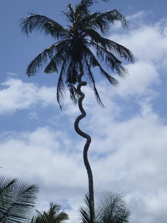 Arcipelago di Zanzibar, Tanzania: Palma a Zanzibar