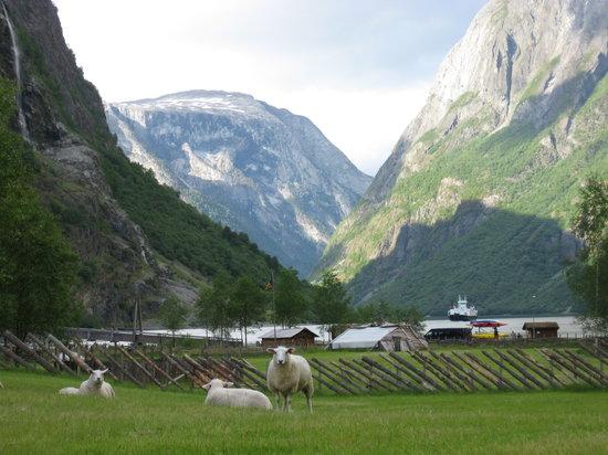 Norge: Naeroyfjord from Gudvangen, Norway