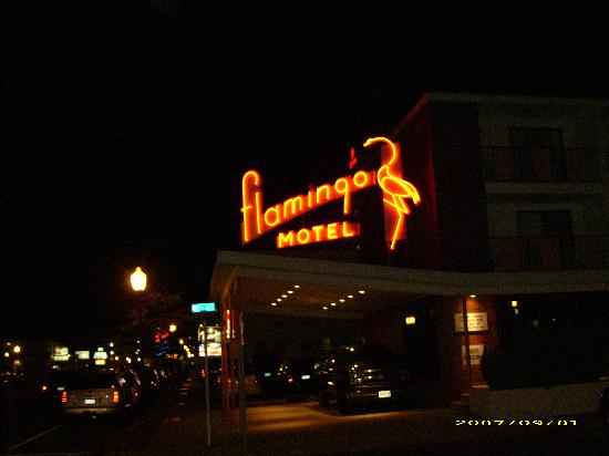 Flamingo Motel: The Flamingo at Night