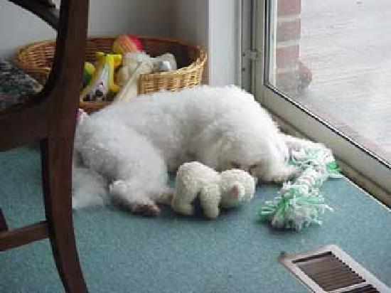 Lisa's Country Kitchen: I'm sulking 'cuz I didn't get to go to Lisa's.