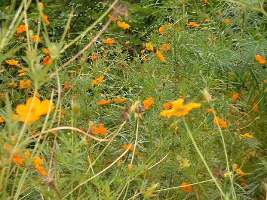 Butterfly Garden Kerala Picture Of Kerala India Tripadvisor