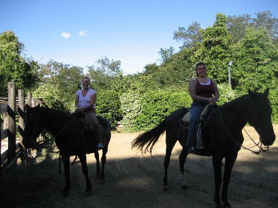 Casa Pippo: Horses at Villa