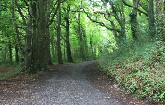 Mullingar, Irland: Ireland: co. Westmeath - Belvedere House, Woodland Walk