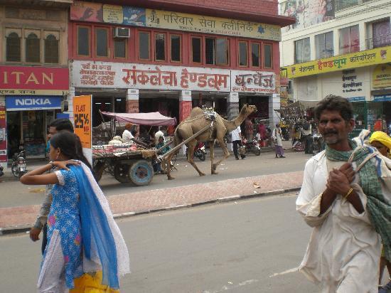 Jodhpur, India: camel traffic