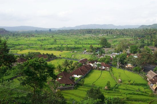 Tirta Gangga: rice field walk
