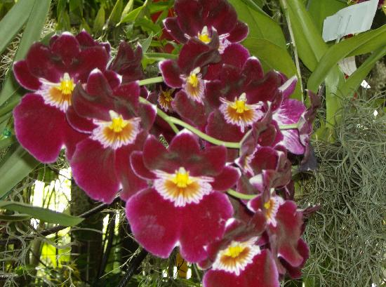 orquidea en la exposicion de orquideas pajaros y flores fotografía