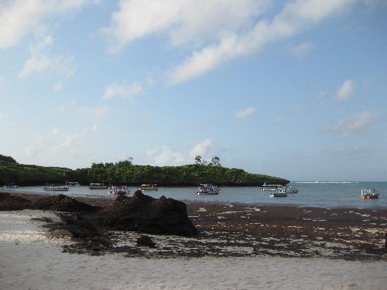 Blue Bay Village: alghe in spiaggia