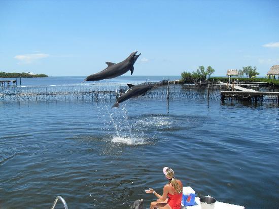 Grassy Key, فلوريدا: majestueux!