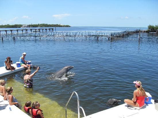 Grassy Key, FL: L'autre groupe
