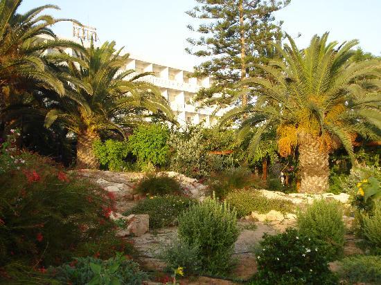Nissi Beach Resort: Hotel Gardens