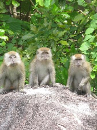 Bagus Place Retreat: Cheeky Monkeys at Bagus Place