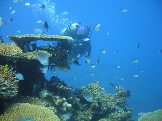 Fiji: fondo