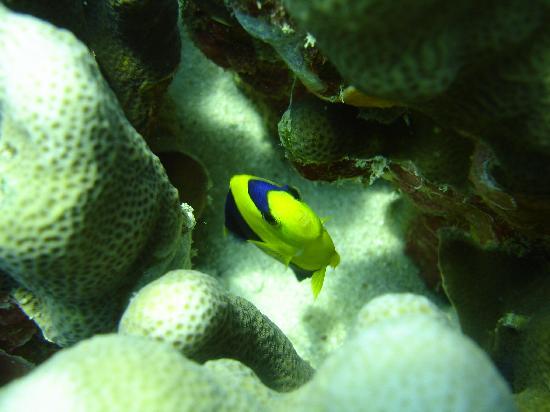 Fiji: pez
