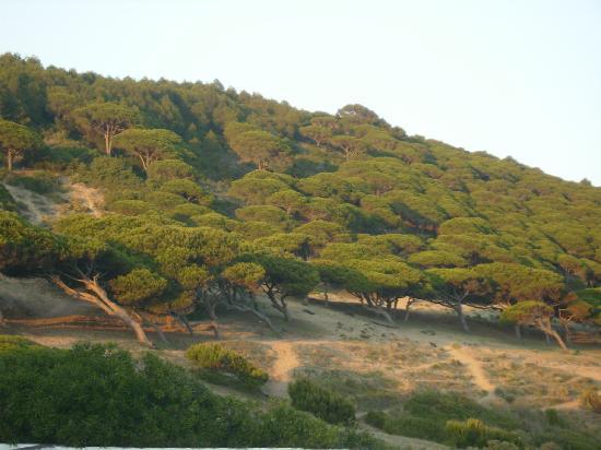 Los Canos de Meca, إسبانيا: Vista del Parque natural desde la habitación.