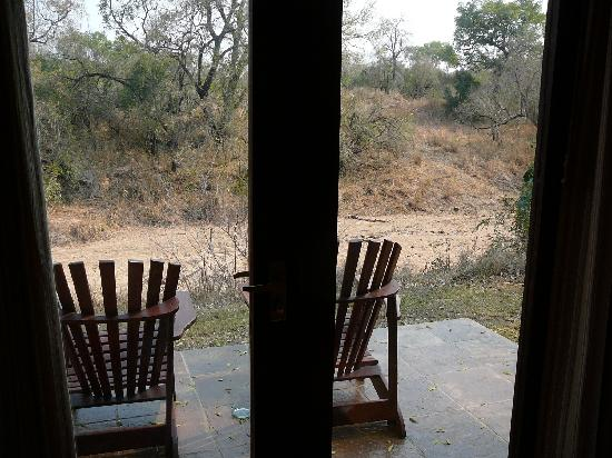 """Sabi Sabi Bush Lodge: View out from Unit 20 to """"baboon trees"""""""
