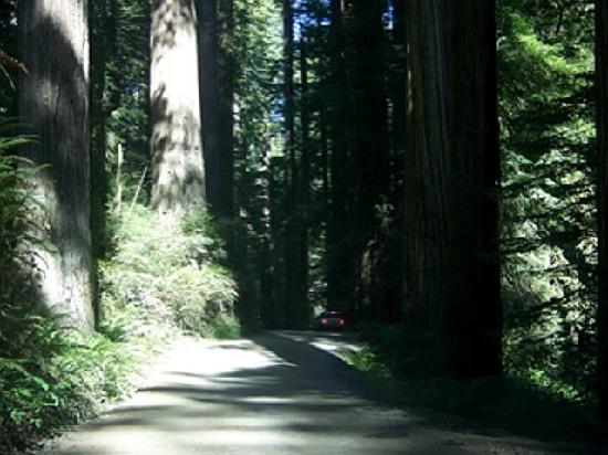Redwood National Park: Howland Hill Rd in Jebediah Smith Redwoods
