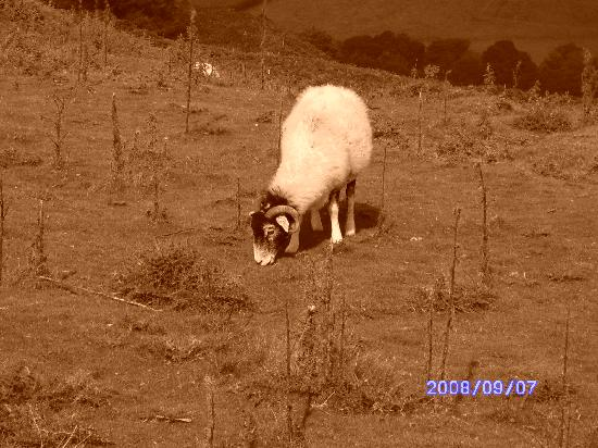 The Tree Relaxation Retreat: Barry the sheep