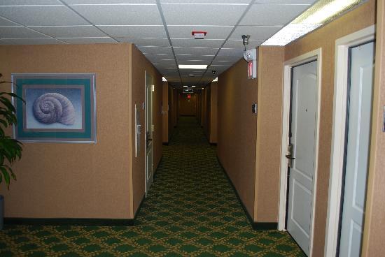 Hampton Inn Ft. Lauderdale - Cypress Creek: hallway