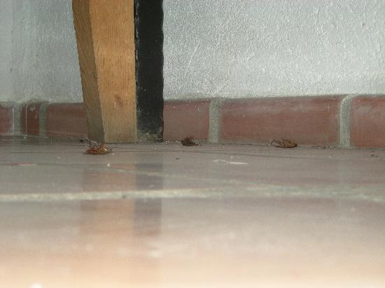 Casabuena Bed and Breakfast: scarafaggi morti