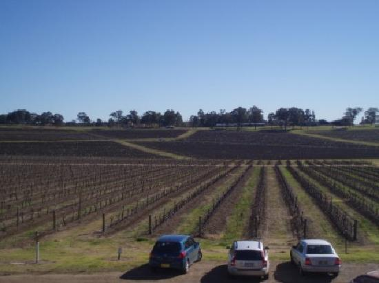 Thistle Hill Guest House: Keith Tulloch Winery