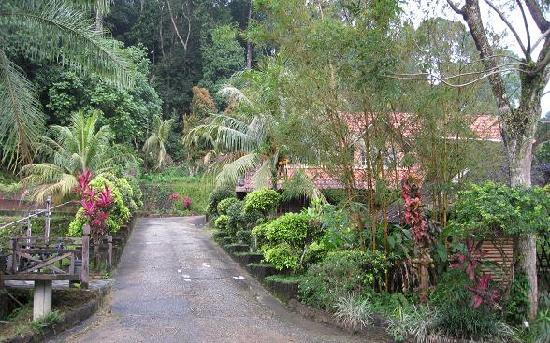 Kota Rainforest Resort : Around the resort